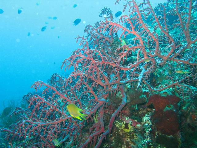 Tulamben with its colorful corals